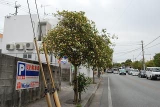 2011_04_17_001_5