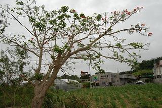 2011_05_03_002_2